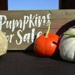 Fall Fun at Harvest Time Farms